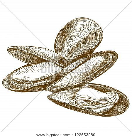 Vector engraving illustration of highly detailed hand drawn mussel isolated on white background