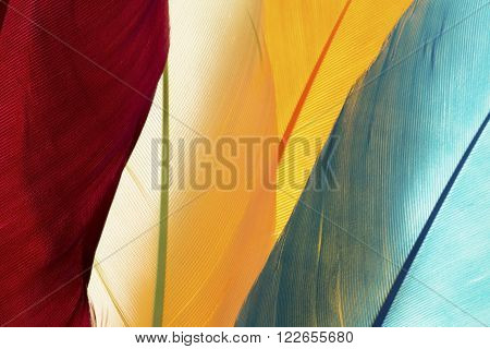 Four colorful feathers close up as background