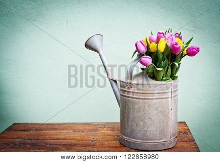 Bouquet of pink and yelow tulips in silver watering can