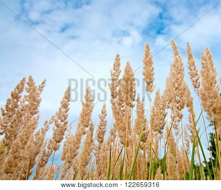 Beautiful nature - herbs on the blue sky background