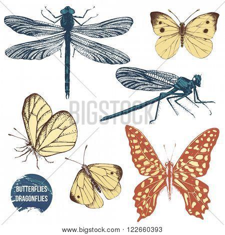 Hand drawn dragonflies and butterflies set