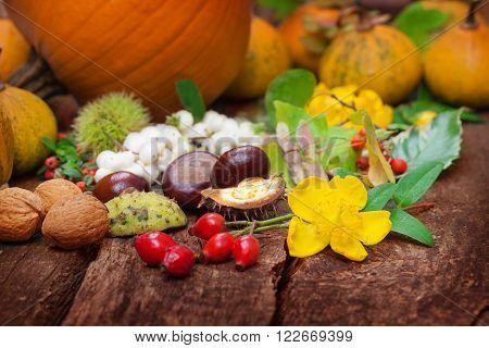 chestnut, rose hips and flower garden on the table