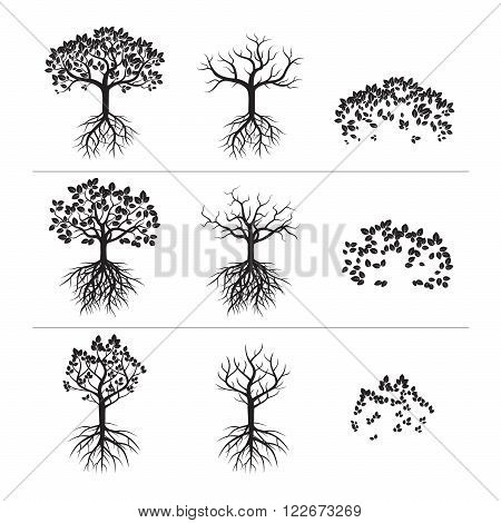Set of Black Trees. Leafs and Roots. Vector Illustration and Graphic Element.