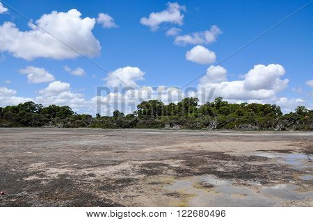 Market garden swamp during a drought with dried shallow landscape surrounded by green trees under a blue sky with clouds in Spearwood, Western Australia.