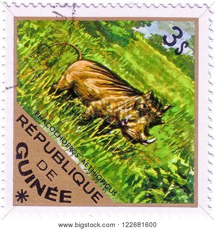 GUINEA - CIRCA 1975: A Stamp shows image of a Wart Hog with the inscription