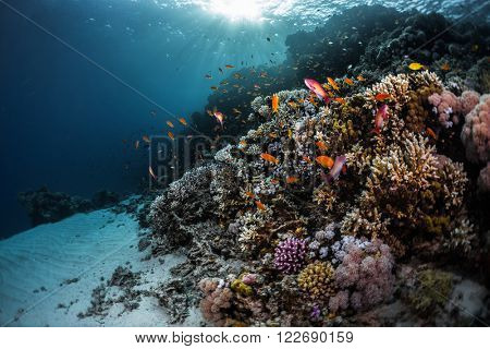 Underwater shot of the vivid coral reef. Red Sea, Egypt