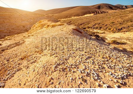 Natural dried riverbed with a lot of shells on Fuerteventura island in Spain