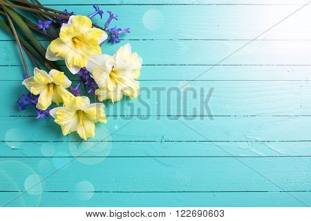 Bright colorful yellow and blue spring flowers in ray of light on green painted wooden planks. Selective focus. Place for text.
