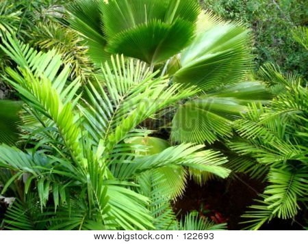 Frond Frolic
