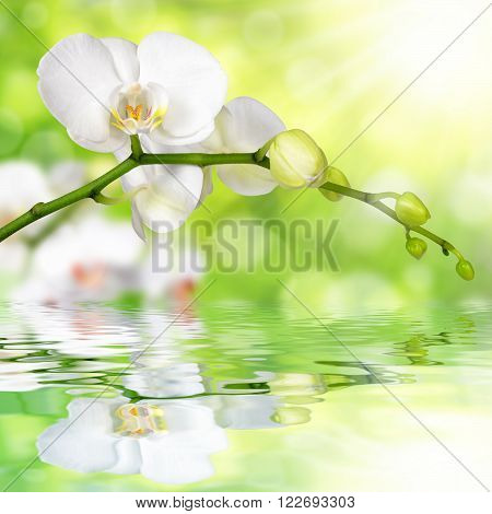 White orchid on a green natural background