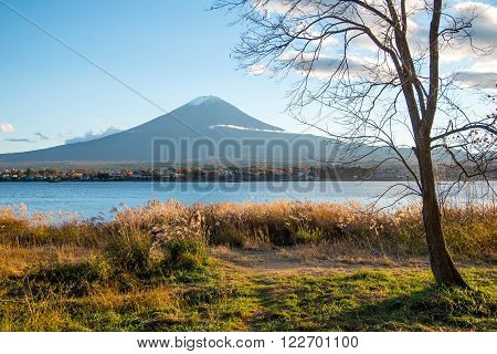 Beautiful view of Mount Fuji and field at Lake Kawaguchi in autumn This mountain is an famous natural landmark of Japan