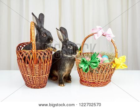 The two baskets and two rabbits on a white background