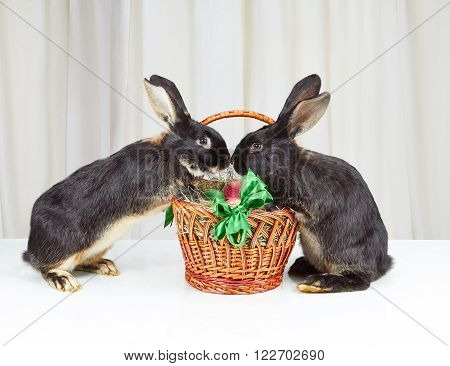 Two rabbits forepaws are based on a basket with Easter eggs