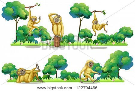 Gibbons living in the forest illustration