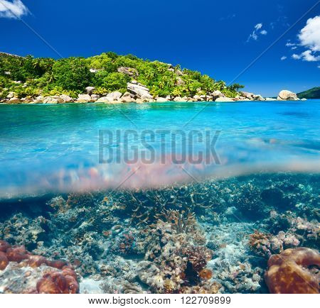 Coral reef at Seychelles split view