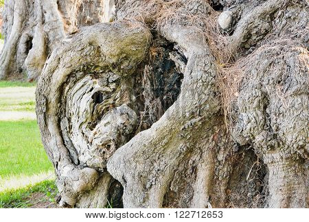 The hollow in a tree in a park, Close up image