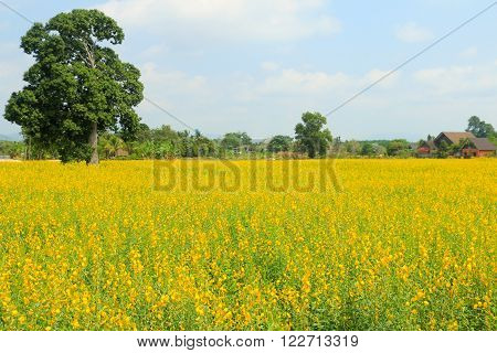Field and yellow field for land scape style.