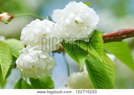 white flowers on tree in spring