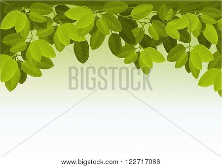 Nature background with ivy leaves - vector illustration
