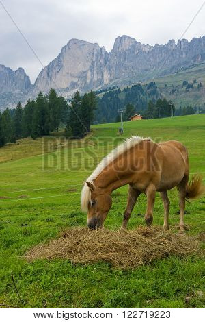 Palomino Horse In The Alps