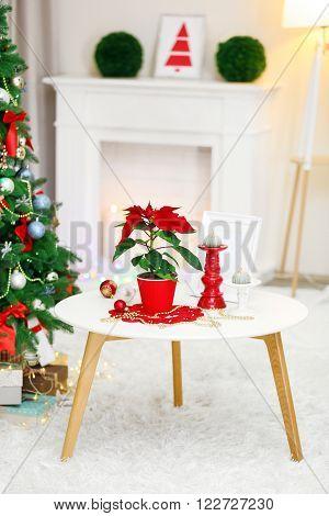 Christmas flower poinsettia on holiday interior
