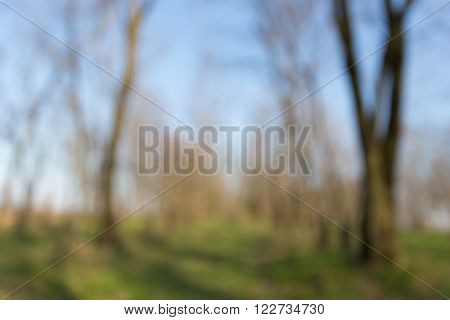 Blurred background of deciduous trees without leaves in the woods in early spring. Blue sky, beautiful sunlight on the trunks of trees, the ground with a young lush grass