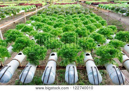 A Hydroponic farm in the northeast of Thailand
