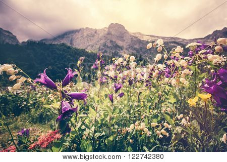 Blooming flowers valley with rocky Fisht Mountains Landscape Summer Travel scenic view moody cloudy sky
