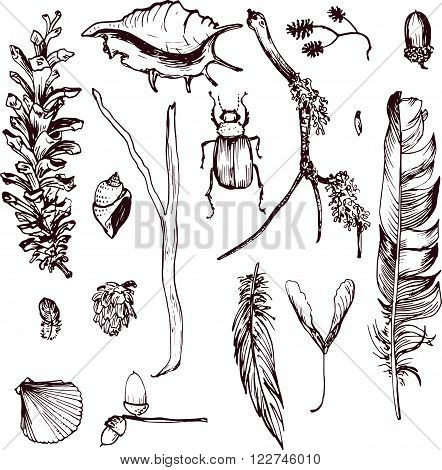 set of  forest objects drawing by ink, seeds and shells, twigs and fethers,  pine cones, hand drawn vector illustration