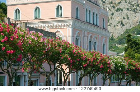 Pink and white building in Capri with pink shrubs in foreground