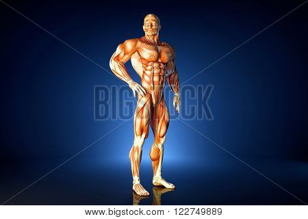 Posing athlete. Anatomical illustration. Contains clipping path.