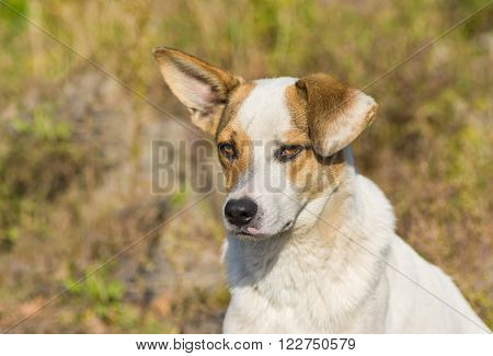 Portrait of adorable mixed breed stray dog with sad face