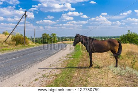 Ukrainian summer landscape with horse waiting for the bus at the roadside