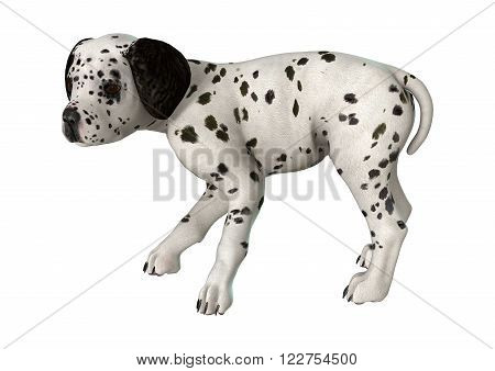 Dalmatian Puppy On White