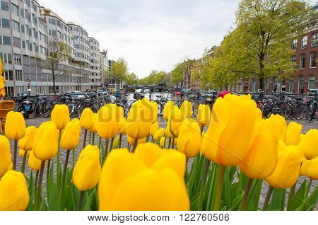 Amsterdam cityscape with tulips down town the Netherlands.
