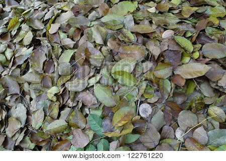Dry leaf that pile up on the wall