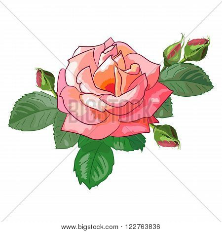 Realistic rose with buds and leaves. Isolated image of a beautiful flower.Floral vector illustration.