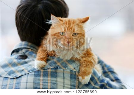 Fluffy red cat sitting on a man's shoulder