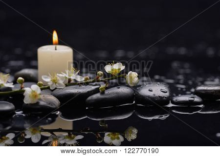 Still life with branch cherry blossom with white candle on black stones