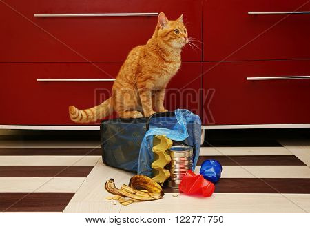 Red cat at full inverted garbage basket on kitchen floor