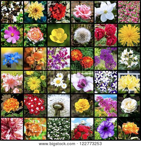 Collage of 36 flowers photos separated by black frames cold filtered