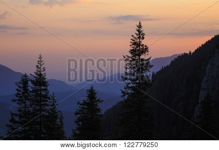 Summer morning mountain landscape with tree silhouette.