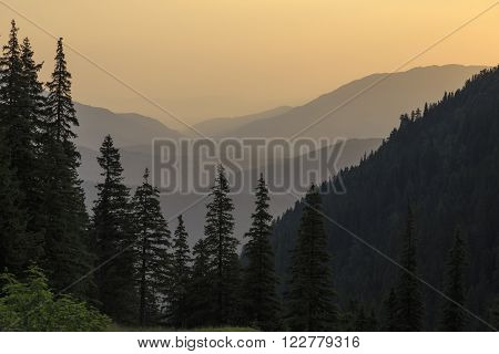 Summer mountain morning landscape with tree silhouette.