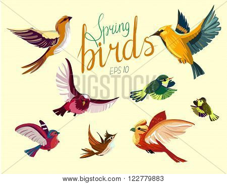 Set of flying spring birds. Vector illustration. isolated