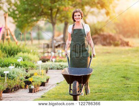 Gardener with wheelbarrow in green apron working in back yard, sunny summer nature, sunset
