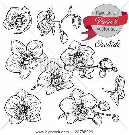 Vector Set Of Hand Drawn Orchid Branches With Flowers.