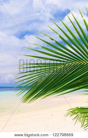 Island Lagoon Exotic Paradise