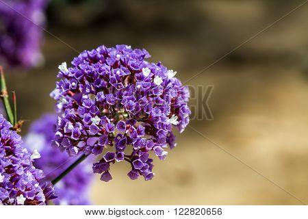 Flora of Israel, Lilac flower garden