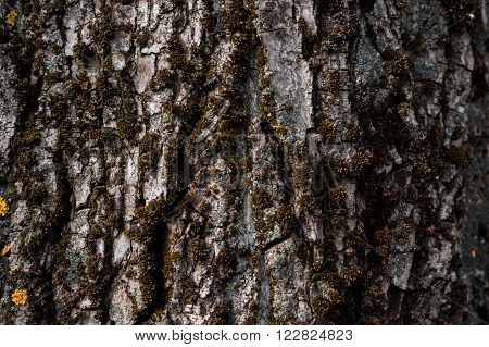 Old Rough Wood Texture. Wooden Texture. Wooden Background. Tree Texture. Tree Background. Crack Tree