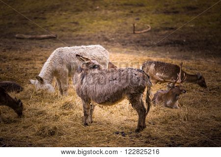 Donkey And Fallow-deer Group